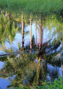 金手指·白鹭湖